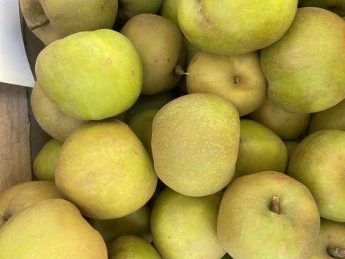 Jabłka szara reneta