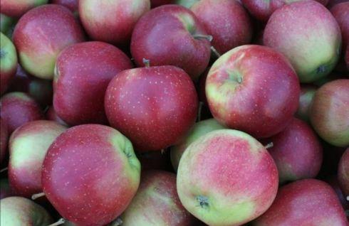 Jabłka eliza