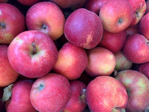 jabłka prince