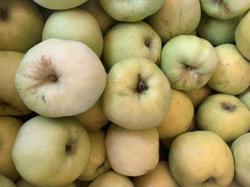 jabłka antonówka