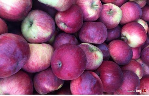 Jabłka cortland